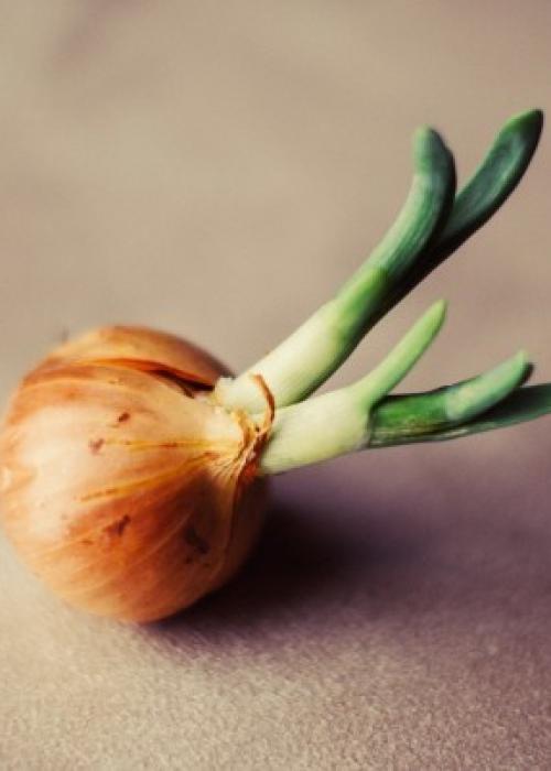 Ricetta di Niko Romito: l'Assoluto di cipolle con Parmigiano Reggiano