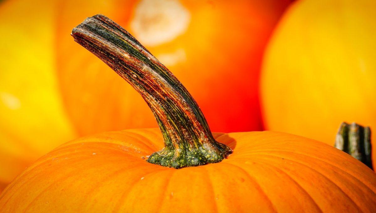 Halloween 2018: le ricette con Parmigiano Reggiano che devi assolutamente provare!