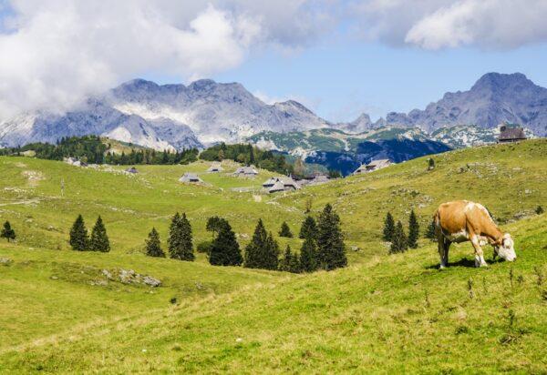Il Parmigiano Reggiano prodotto in montagna è un marchio di cui il Caseificio La Madonnina ti parla in occasione della Giornata Internazionale della Montagna 2018
